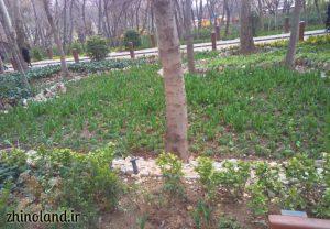 جشنواره لاله بوستان باغ ایرانی