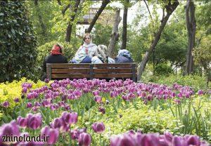 لاله های باغ ایرانی ده ونک